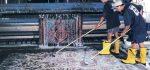 لیست کارخانه های قالیشویی مجاز در مشهد + شماره تلفن
