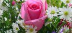 خرید گل و گیاه از سایت بانک گل | خرید آنلاین گل